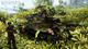 Battlefield V (PC Code in a Box) [Edizione: Regno Unito]