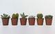 VIVAI APRILI | Piante Grasse Vere MIX Cactacee 6 pezzi. Pianta grassa di cactus vero e pia...