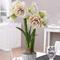 Potseed . Lily Amaryllis - Specie originaria Hippeastrum Petali Amaryllis - 100pcs / Pack:...