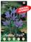 Holland Park bulbi da fiore di molte varietà e colori in sacchetto blister con foto (CROCU...