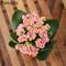 GETSO 100pcs / Bag Kalanchoe pianta (. Kalanchoe blossfeldiana Poelln) Longevità Fiori Inv...