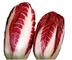 100 RADICCHIO ROSSA DI TREVISO precoce Semi No OGM Organic heirloon Gourmet