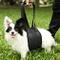 Pet Tribe PT72850 Imbracatura di Supporto per Cani, Walking Aid Full Body, Taglia S