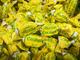 Mera & Longhi Caramelle Balsamiche Dure al Mentolo Eucalipto - Confezione da 3 kg