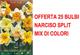 OFFERTA 25 BULBI NARCISO SPLIT CORONA MIX DI COLORI BULBS BULBES