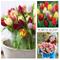 Plant & Bloom - Bulbi da fiore, tulipani trionfo dall'Olanda - 35 bulbi, semina autunnale,...