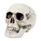 Boland- Teschio Decorazione Skull Maxilla con Mandibola Apribile, Bianco, 74362