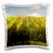 Danita Delimont - Vineyards - Italy, Tuscany. Steep hills of vineyards in the Chianti regi...