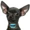 PetSol - Collare anti-abbaio per cani di piccola taglia, colore blu, perfetto per l'addest...