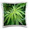Danita Delimont - Plants - Close-up view of marijuana plant, Malkerns, Swaziland. - 16x16...
