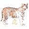 Stencil a forma di tigre, riutilizzabili, motivo: gatto africano, animali selvatici medium