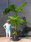 Pinkdose La vendita calda 10pcs piante Palma Garden Ornament Perenial Trachycarpus Fortune...