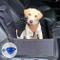 Lavabile Seggiolino Auto per Cani | Trasportino per Cane Auto di Taglia Media e Piccola co...