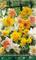 BULBI AUTUNNALI NARCISO ALL TYPES MIX CONFEZIONE DA 5 BULBI BULBS BULBES
