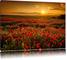 Mantiburi - Stampa su tela, soggetto: papaveri che fioriscono al tramonto, colore rosso Nu...