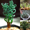 Semi, Catkoo 200Pcs Piante grasse rare Home Garden Magic Spiral Spring Grass Bonsai Seeds