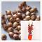 lampadine di alta qualità (tulipani, gladioli, shigarlic, bulbi Giacinto) non è un seme di...