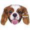 Pet Faces Cuscino con Muso di Cane King Charles
